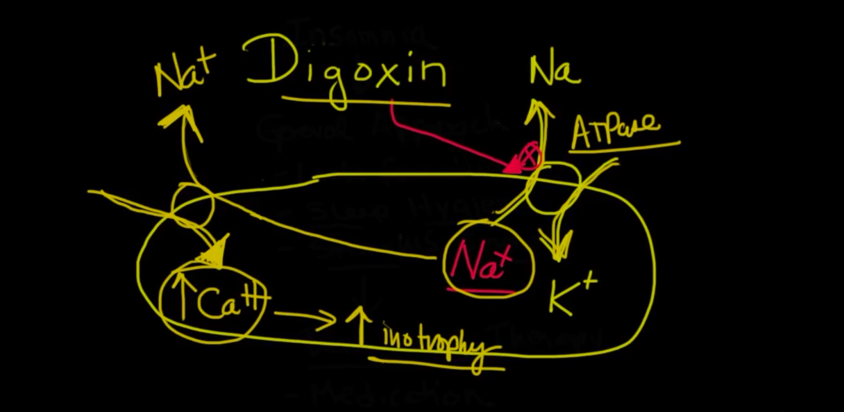NAPLEX Practice Question: Digoxin Video Explanation